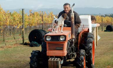 Vineyard Manager – Glenn Smith